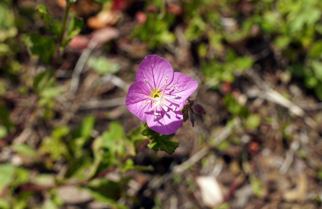 雑草の中に可憐な花が・・花の名前はわからず・・